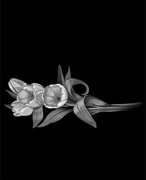 Цветы. Тюльпаны