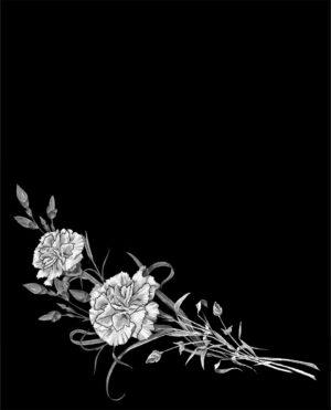 Цветы. Гвоздики.